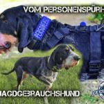 Vom Personenspürhund zum Jagdgebrauchshund